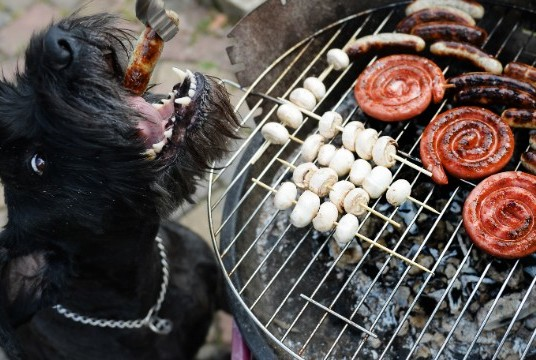 Dog 'Chili' gets a grilled sausage during the first barbecue of this spring in Busbach, southern Germany, on April 14, 2013. Temperatures in parts of the country reached 20 degrees Celsius and even more.     AFP PHOTO / DAVID EBENER    GERMANY OUT