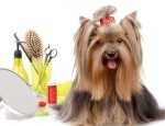 Dog-with-grooming-tools_159068462-1000x641
