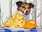 The Dog's Dinner -A tiny Jack Russell is pictured getting ready to tuck into a giant portion of fish and chips. This image was taken to highlight the results of new research from MORE TH>N Pet Insurance, which shows how 72% of cat and dog owners feed their pets unhealthy human foods and takeaways every week.