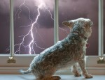 dogs-calm-in-storm