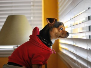 dog-window-waiting_34772_990x742