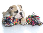 Rope Toys For Dogs - The good and the bad, using a rope toy properly with your dogs.