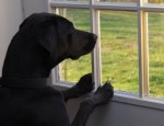 kmg-630-dog-window