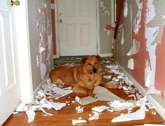 2.20.15-Dogs-Who-Are-Proud-They-Trashed-Your-House1