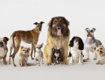 many-types-dogs_a3850d3a4da33cda
